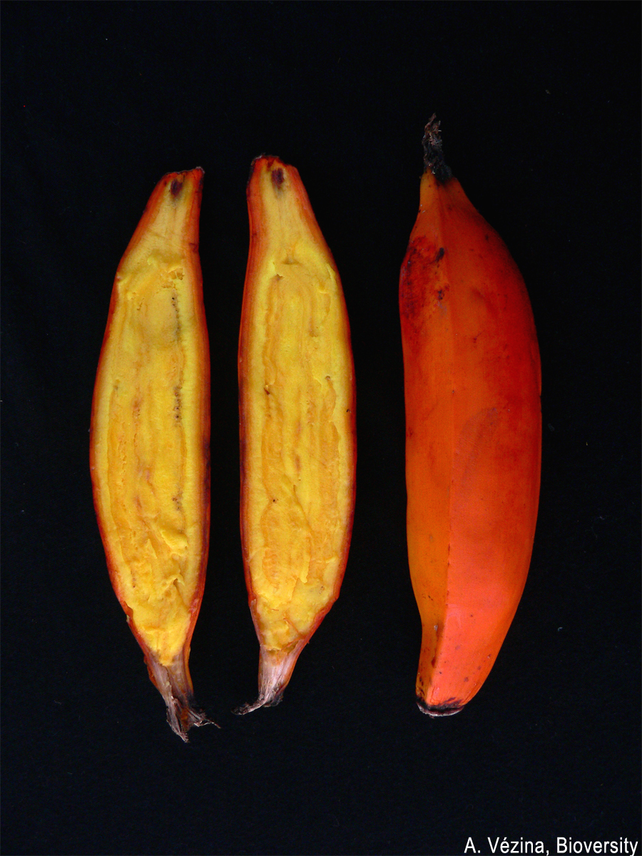 Orange-fleshed fruits tend to have high levels of provitamin A carotenoids.