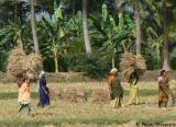 Intercrop Coconut India